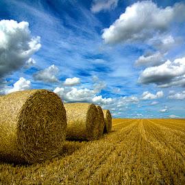 Alpacas redondas 2 by Eduardo Menendez Mejia - Landscapes Prairies, Meadows & Fields ( uk, tokina 12-24, cambridgeshire, alpacas, round, eduardo, menendez, cambridge, inglaterra, redondas, balas, nikon, d5100 )