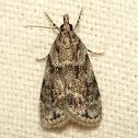 Many-spotted Scoparia