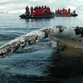 Antarctica High Five by Jeff Adams - Novices Only Wildlife