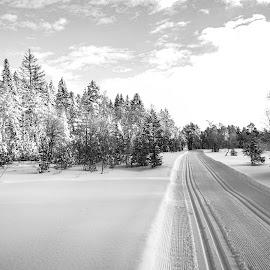 by Anngunn Dårflot - Landscapes Forests