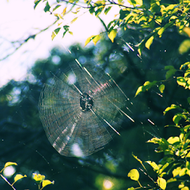 Fall Spiderweb by Ellee Neilands - Nature Up Close Webs ( nature, spider, spider web )