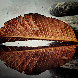 Dried leaf and reflection by Janette Ho - Artistic Objects Still Life (  )