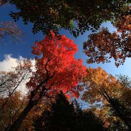 Unedited Wisconsin Fall by Nathan Porath - Landscapes Forests ( wisconsin, fall, unedited, forest, landscape, tree tops )