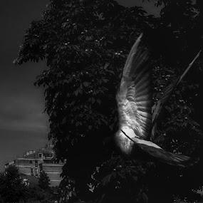 by Aleksander Petric - Black & White Animals