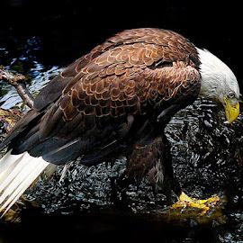 Stream Fishing by John Larson - Animals Birds