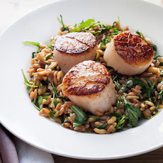 Seared Scallops with Lemony Farro and Arugula Salad