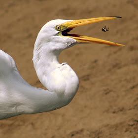 birdandcrab-edit.jpg