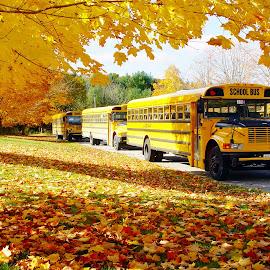Yellow Schoolbus by Andrey Muretov - Transportation Automobiles ( school, bus, autumn, yellow )