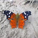 Buttlerfly
