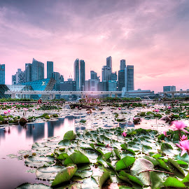 sunset at marina bay by Lloyd Albert Manto - City,  Street & Park  Skylines ( lloydmanto, skyline, waterscape, lomhanz, sunset, cityscape, singapore, city )