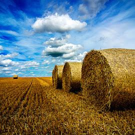 Balas de paja 3 by Eduardo Menendez Mejia - Landscapes Prairies, Meadows & Fields ( uk, tokina 12-24, paja, cambridgeshire, balas, eduardo, menendez, nikon, d5100, cambridge, inglaterra )