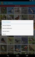 Screenshot of UK Birds Sounds