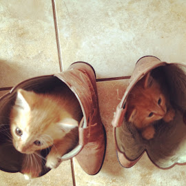 There's a Cat in my Boot by Lacey Dumas - Animals - Cats Kittens ( cat, kitten, playful, cute, boots )
