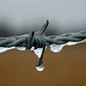 Barbed Wire with ice.jpg
