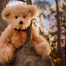 Little Ted in a tree by Esther Visser - Artistic Objects Toys