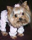 Small Dog1