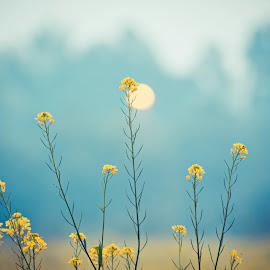 Mustard Field.  by Abhishek Solanki - Nature Up Close Gardens & Produce ( farm, mustard, art, asia, india, travel, yellow, landscape, flower )