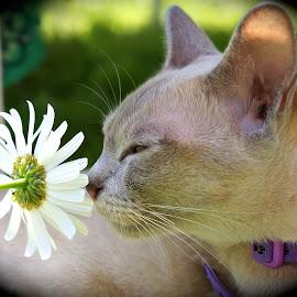 Summer flowers by Krista Nurmi - Animals - Cats Portraits (  )