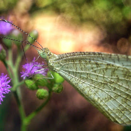 Butterfly  by Lin Thu - Instagram & Mobile Android ( nature, close up )