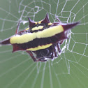 Jewel spider