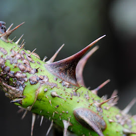 by Luka Jurca - Nature Up Close Other plants