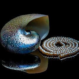 pearls? by Adjie Tjokrosoedarmo - Artistic Objects Still Life
