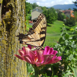 Finally A Butterfly by Melanie Goins - Nature Up Close Other Natural Objects ( butterfly, nature, flower )