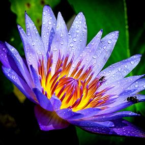 by Edwin Teow - Flowers Single Flower
