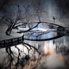 loneliness by Alexandru Andreescu - City,  Street & Park  City Parks