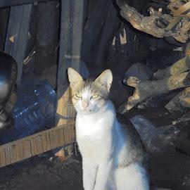 Cat  by Dineshkumar Palanaichamy - Animals - Cats Playing ( vessel, cat, wood,  )