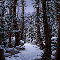 Live Wallpaper - Winter Forest