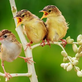 Three Birds by MazLoy Husada - Animals Birds