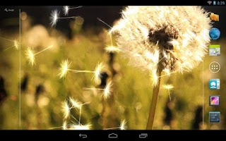 Screenshot of Dandelion Live Wallpaper