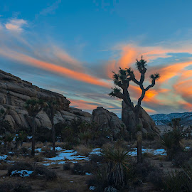Joshua Tree Sunrise and Snow by Patrick Flood - Landscapes Sunsets & Sunrises ( canon, joshua treee, photosbyflood, national park, dawn, patrick flood, california, joshua trees, snow, sunrise, twentynine palms )