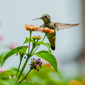 Get my good side. by Kevin Mummau - Novices Only Wildlife ( bird, pollen, hummingbird, songbird, garden )