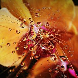 Tell Me Wah Beauty Is by Marija Jilek - Nature Up Close Natural Waterdrops ( water, orchid, nature, seed, drops, plants, natural waterdrops, foat-beard )