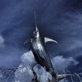 by Jim Keller - Novices Only Objects & Still Life ( #marlin #statue #fish #beautiful )