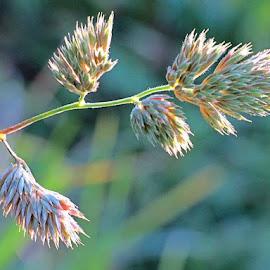 by Simona Maček - Nature Up Close Leaves & Grasses