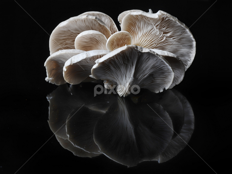 Reflections by Cristobal Garciaferro Rubio - Nature Up Close Mushrooms & Fungi