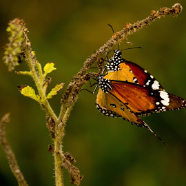 Color Color by Madhujith Venkatakrishna - Animals Insects & Spiders