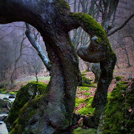 tree, rock, mosses by Cosmin Popa-Gorjanu - Nature Up Close Trees & Bushes ( tree )