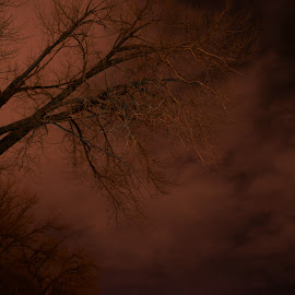 Gloomy tree by Dustin White - Nature Up Close Trees & Bushes ( clouds, tree, cliff, long exposure, night )