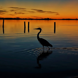 Sunset Sentry by Rick Danuser - Landscapes Sunsets & Sunrises
