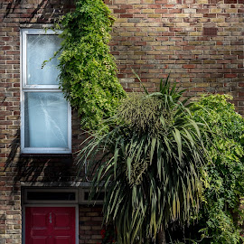 #144 by Tavi Ionescu - Buildings & Architecture Homes ( red door, home, 144, building, camden town, london, grass, plants, number, house, united kingdom )