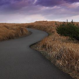 Paths by Gabriel Gutierrez - Landscapes Prairies, Meadows & Fields ( long beach, tree, sunset, travel, filed,  )