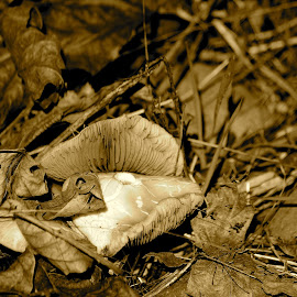 by Chris Patterson - Nature Up Close Mushrooms & Fungi ( mushroom, fungi, nature, forest floor, leaves )