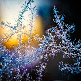 Frost! by Steve Kazemir - Nature Up Close Other Natural Objects ( macro, frost, sunrise, morning, frozen, closeup )