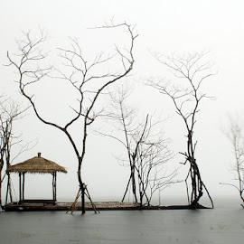 Tamblingan foggy by Angga Bagoes - Landscapes Weather ( bali, foggy, tree, indonesia, lake,  )
