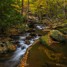 Peace by Frank Kenens - Landscapes Forests ( forests, smokey, stream, national park, fall )