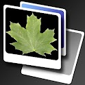 Leaves simple LWP icon